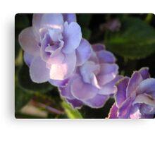 Violet Violets Canvas Print