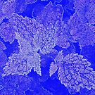 Blue Leaves 1 by JessicaMWinder
