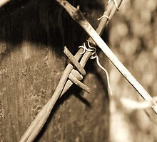 Barbed Wire by KClaborn