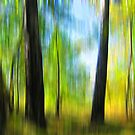 Spring forest by Caterpillar