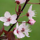 Blossoms in Green by Martina Fagan