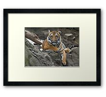 Cubs Stand Framed Print
