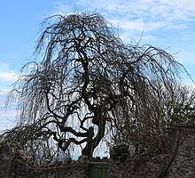Twisted Tree by lynn carter