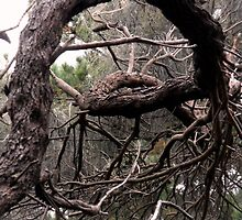 Twisted Tree by Kayleigh Walmsley