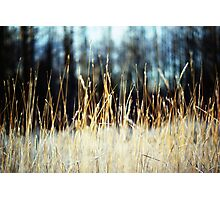 grass|glade Photographic Print