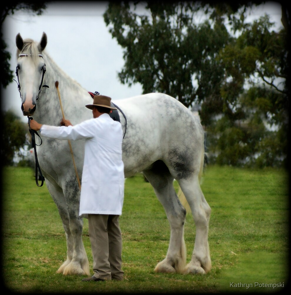 Tallest horse in the world 2012