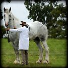 Noddy the tallest horse in the world by Kathryn Potempski