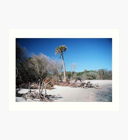 Lone Palmetto, Folly Beach Art Print