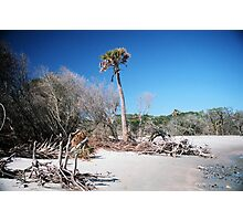 Lone Palmetto, Folly Beach Photographic Print