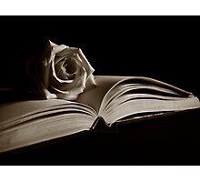 Literary Rose Photographic Print