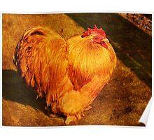 Cochin Chicken  Poster