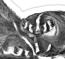 Illustration of the american badger Sticker