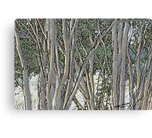 Light in the Crepe Myrtles Canvas Print