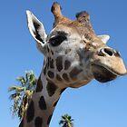 Giraffe by diverdan0