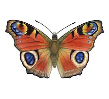 Peacock Butterfly (Inachis io) Photographic Print