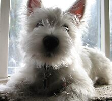 Westie Sentry by MarianBendeth