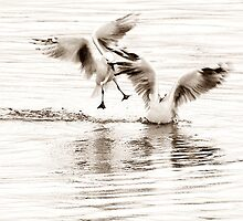 seagulls by Clare Colins