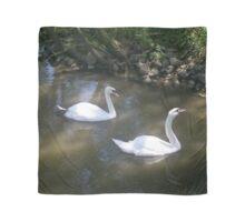 Curious Swans Scarf