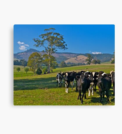 Expensive farmland at Mt Worth, Victoria Canvas Print