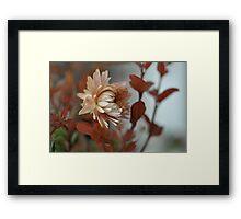 Una flor.............. Framed Print