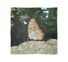 Tailed Jay Butterfly - Wings Closed Scarf