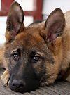 Sable Pup II by Sandy Keeton