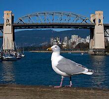 City Gull by smartart