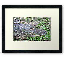 happy florida gator Framed Print