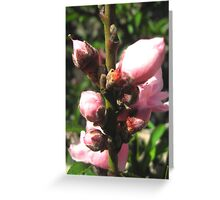 Spring is Bursting Out All Over! Greeting Card