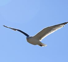 Soaring by HALIFAXPHOTO