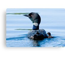 Adult Loon and Baby - Mississippi Lake, Ontario Canvas Print
