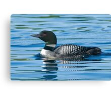 Common Loon - Mississippi Lake, Ontario Canvas Print