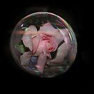 Rose in a bubble by julie anne  grattan