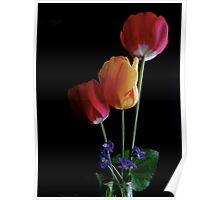 Tulips (Ambient Light) Poster