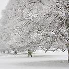 Snow on Beverley Westwood by Jon Tait