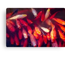 Goldfish II Canvas Print