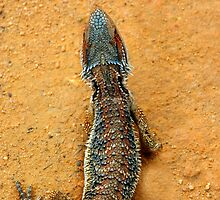 BEARDED DRAGON SCALES by Helen Akerstrom Photography