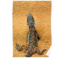 BEARDED DRAGON SCALES Poster