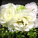 Lisianthus - Delicate &amp; Beautiful by EdsMum