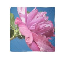 Pink Rose of Sharon Beauty Scarf