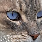 Blue Eyes by Claire  Farley