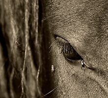 Eye and Fly by Ann  Palframan