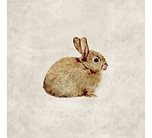 Vintage Rabbit Study in Watercolour Photographic Print