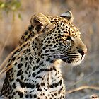 Leopard portrait - Djuma Game Reserve by Bassy