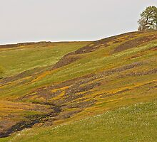 Springtime at a Volcanic Meadow by John Butler