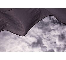 windthrown Photographic Print