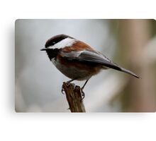 Feathered Woodland Sprite Canvas Print