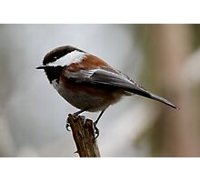 Feathered Woodland Sprite Photographic Print