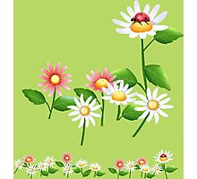 Jolly daisies with little ladybug Photographic Print