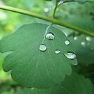 Tears of Nature by Elena Skvortsova